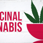 80% of People Aged 60+ Willing to Ask Doctor About Medicinal Cannabis, New Survey Finds